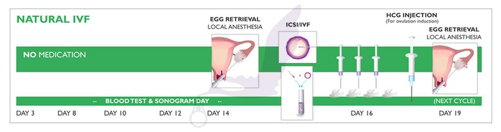 Natural-IVF-Graphic.jpg
